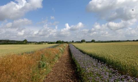 landbrugsstoette_Vildtstribe