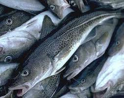 fiskbillede