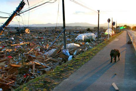 Fukushima_wastland