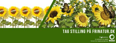 Sunflowers FB event