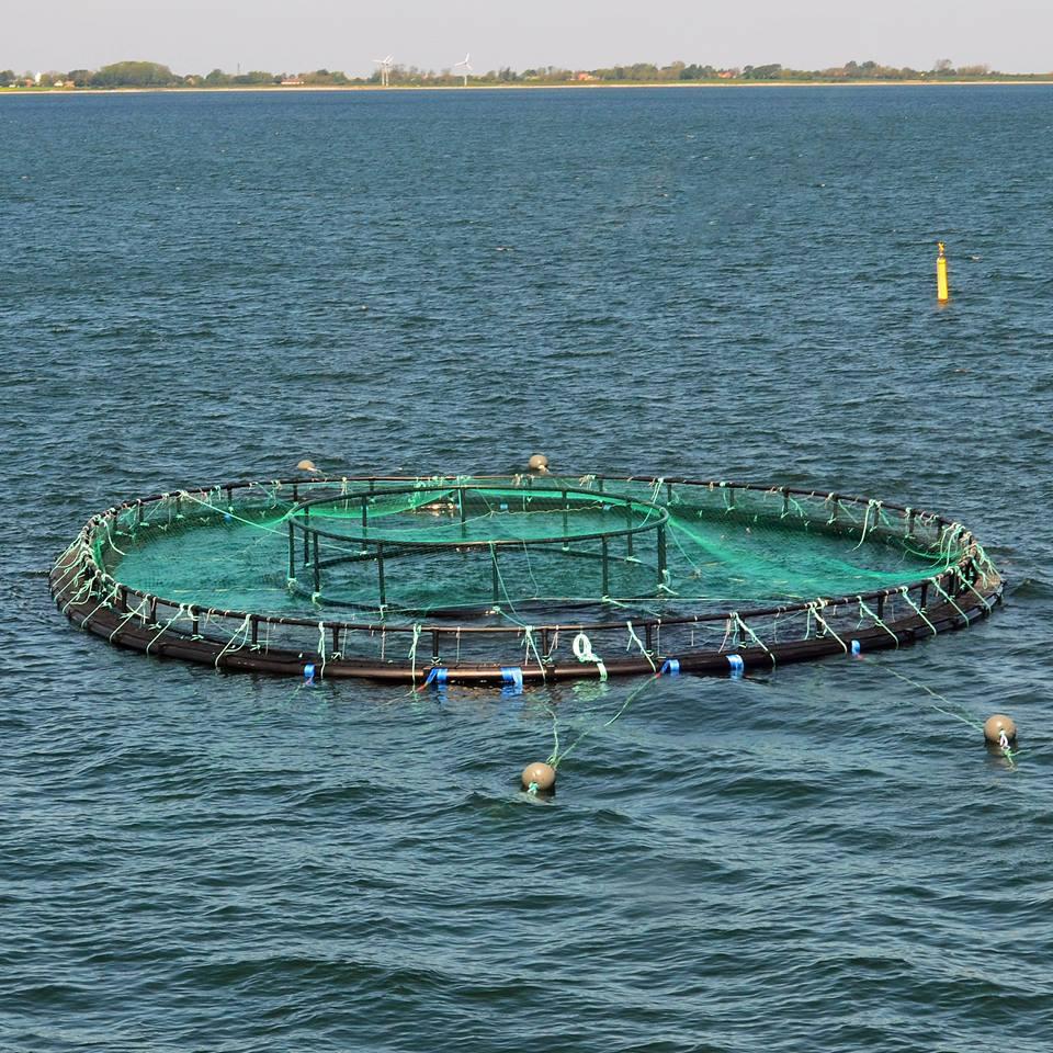 havdambrugendelave